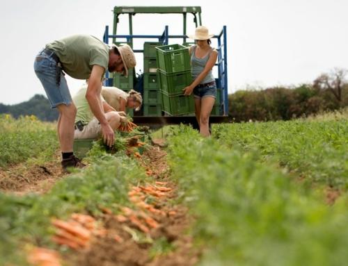 Nachhaltigkeitspreis für Demeter-Felderzeugnisse